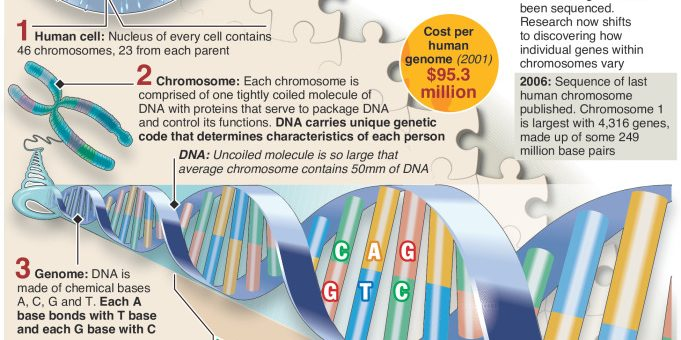 Discovery of DNA double helix – 65th anniversary of Crick and Watson's landmark work – an annotated infographic